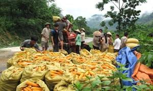Tập trung sức tạo việc làm, giảm nghèo bền vững