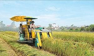 Nông nghiệp nên lựa chọn lợi thế khi hội nhập