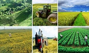 Miễn tiền sử dụng đất đối với nhà đầu tư có dự án nông nghiệp đặc biệt ưu đãi đầu tư