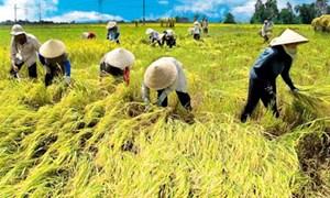 Tái cơ cấu ngành nông nghiệp nước ta hiện nay