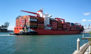 4 mặt hàng nhập khẩu theo chế độ hạn ngạch thuế quan