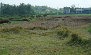 Gộp nhiều thửa để tính tiền sử dụng đất