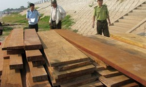 An Giang: Bắt giữ 70m3 gỗ lậu