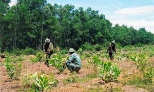 Mức chi ngân sách cho tổng điều tra rừng
