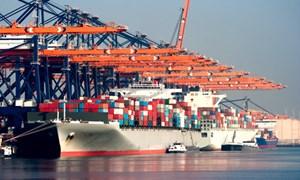 Truy tìm 2 chủ hàng của 10 container hàng nhập lậu