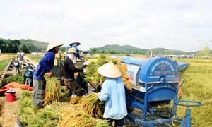 Giảm tổn thất trong nông nghiệp bằng chính sách hỗ trợ lãi suất vay