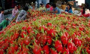 Xuất khẩu nông sản đạt 14,6 tỷ USD