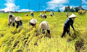 Nông nghiệp cần trụ đỡ chính sách