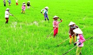 Bộ Tài chính: Trách nhiệm trong việc thực hiện thí điểm bảo hiểm nông nghiệp