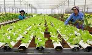 Thêm lực đẩy cho doanh nghiệp đầu tư vào nông nghiệp