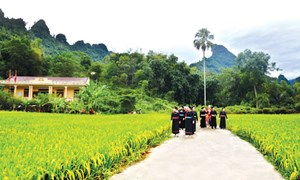 Phân bổ vốn ngân sách trung ương thực hiện Chương trình mục tiêu quốc gia xây dựng nông thôn mới năm 2021