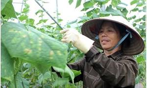 Nâng cao năng suất, chất lượng sản phẩm hàng hóa, dịch vụ của doanh nghiệp, hợp tác xã tại Lạng Sơn