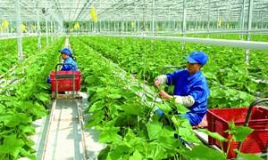 Phát triển nông nghiệp xanh ở Việt Nam và những vấn đề đặt ra trong bối cảnh hiện nay