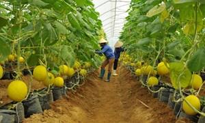 Liên kết nông nghiệp Việt Nam – Nhật Bản ở Hà Nam