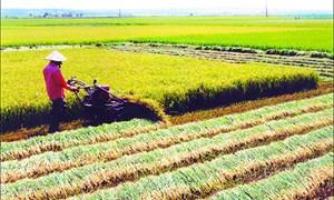 Tiếp thêm động lực cho doanh nghiệp đầu tư vào nông nghiệp, nông thôn