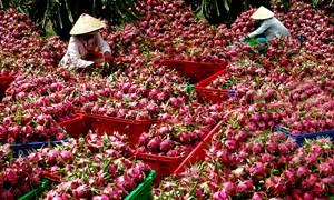 Tiêu thụ nông sản: Nếu cần, Bộ trưởng sẽ đi tiếp thị