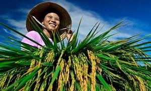 Tín dụng nông nghiệp, nông thôn:  Đột phá tầm nhìn, mở nút giải pháp