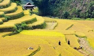 Cần đột phá thể chế phát triển nông nghiệp