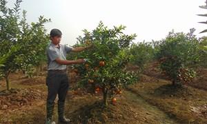 Phát triển các quỹ tín dụng nhân dân khu vực Đồng bằng sông Hồng