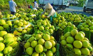 Bàn về tốc độ tăng trưởng của ngành Nông nghiệp Việt Nam