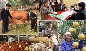 Tài chính toàn diện hướng đến xóa đói giảm nghèo và phát triển kinh tế nông thôn bền vững