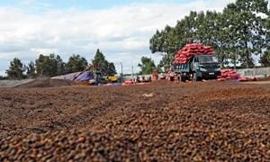 Tư nhân và PPP sẽ mở khóa tái cơ cấu nông nghiệp