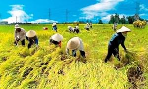 Tín dụng nông nghiệp: Vừa cho vay, vừa...run