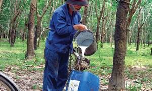Doanh nghiệp cao su: Chế biến mất mùa, chế tạo hưởng lợi
