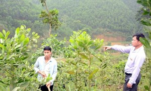 Gỡ vướng về hạn mức chuyển mục đích sử dụng đất nông nghiệp sang đất ở
