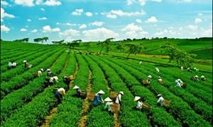 Nhiều chuyển biến tích cực trong triển khai Chiến lược tăng trưởng xanh