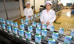 Vinamilk nhập 400 bò sữa mang thai cao sản từ Úc