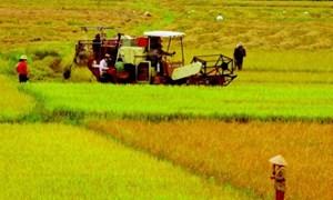 Cho vay nông nghiệp sẽ mở hơn