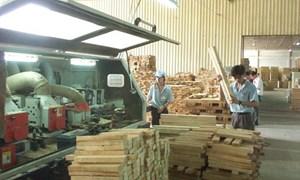 """Mở cửa hội nhập: Doanh nghiệp gỗ nguy cơ """"vuột"""" mất ưu đãi TPP"""