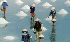 Chỉ thông quan muối nhập khẩu khi có kết quả kiểm tra chất lượng