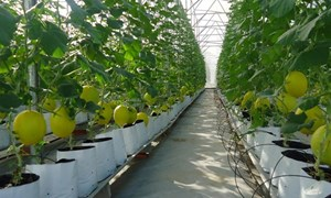 Cơ chế cho sự đồng hành cùng nông nghiệp