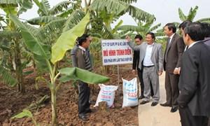 Ngọn cờ đầu trong ngành sản xuất kinh doanh phân bón, hóa chất Việt Nam