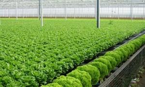Phải lấy lại niềm tin tiêu dùng vào rau sạch