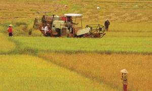 Vay tín chấp nông nghiệp - Diện mạo mới cho doanh nghiệp