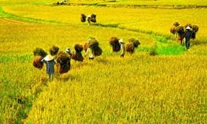 Để phát huy vai trò của nông dân trong phát triển kinh tế - xã hội, xây dựng nông thôn mới