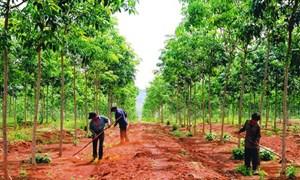 Phát huy hiệu quả của chính sách giao đất, giao rừng