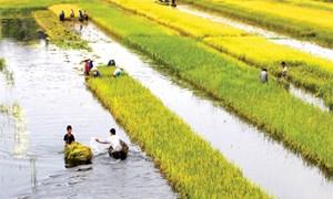 Bảo hiểm nông nghiệp - Chính sách ưu việt cần tiếp tục triển khai