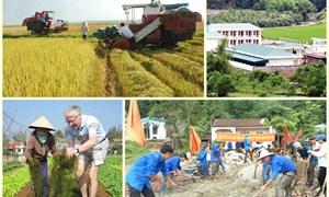 Năm 2020, số xã đạt tiêu chuẩn nông thôn mới khoảng 50%