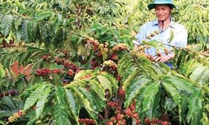 Hỗ trợ hàng dự trữ quốc gia trong nông nghiệp cho các tỉnh miền Trung, Tây Nguyên