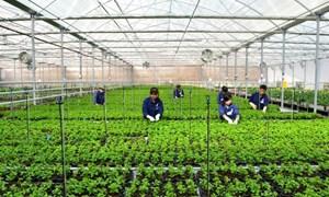Tạo đà cho khởi nghiệp nông nghiệp công nghệ cao