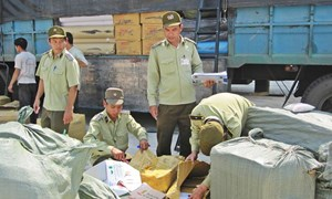 Ninh Thuận: Phát hiện, xử lý 383 vụ vi phạm trong Quý III/2017