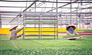 Số hóa nông nghiệp: Lộ trình không thể thay đổi