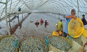 Doanh nghiệp nhập khẩu hải sản có phải lập đề án bảo vệ môi trường?
