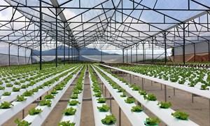 Hỗ trợ 80% kinh phí ứng dụng công nghệ cao đối với dự án nông nghiệp