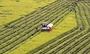 Tiêu chí xác định doanh nghiệp nông nghiệp ứng dụng công nghệ cao