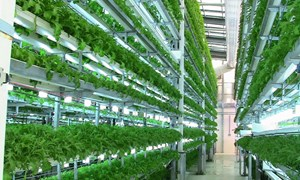 Kỳ vọng nông nghiệp công nghệ cao